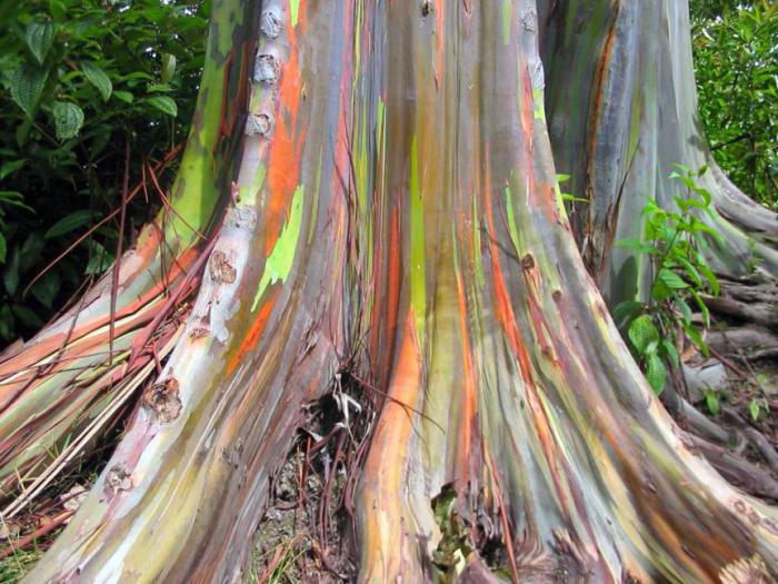 lista roślin w Australii