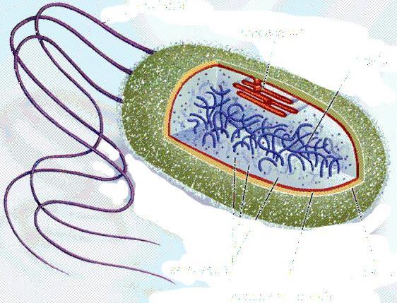 léčba bakteriálních onemocnění
