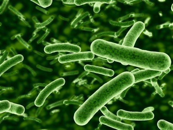 bakteriální infekční choroby