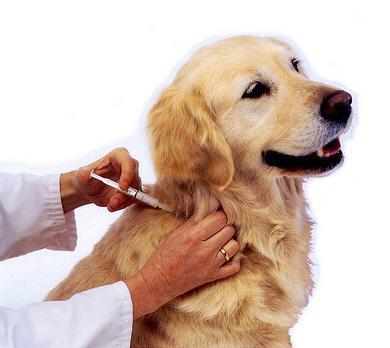 bakteriální choroby zvířat