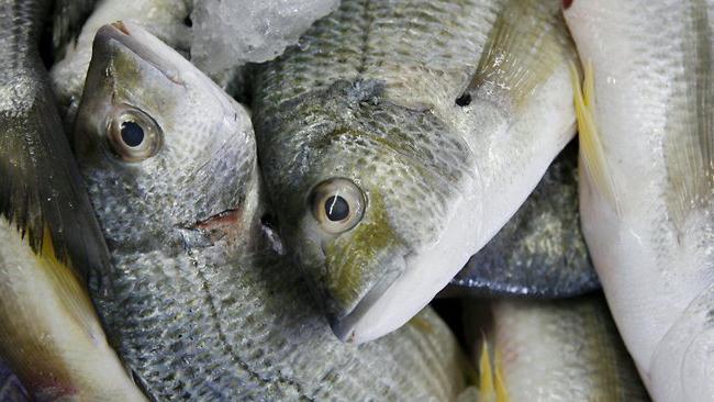 Pesca d'orata in inverno