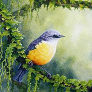 вилинска птица 2 класе