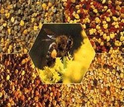 пчелињи полен