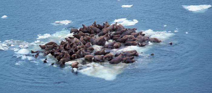 opis zemljopisnog položaja Beringovog mora