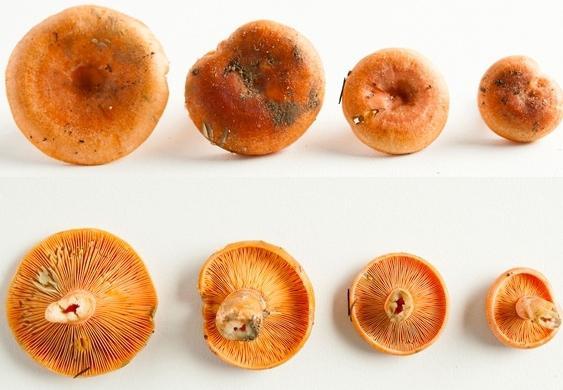 sale di funghi