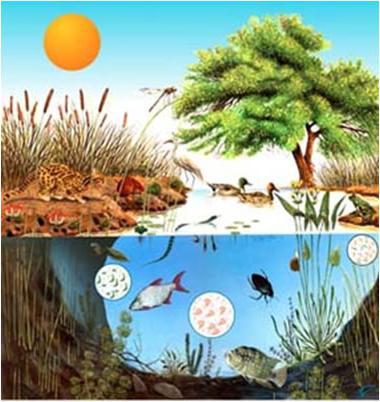 Структура биоценозе