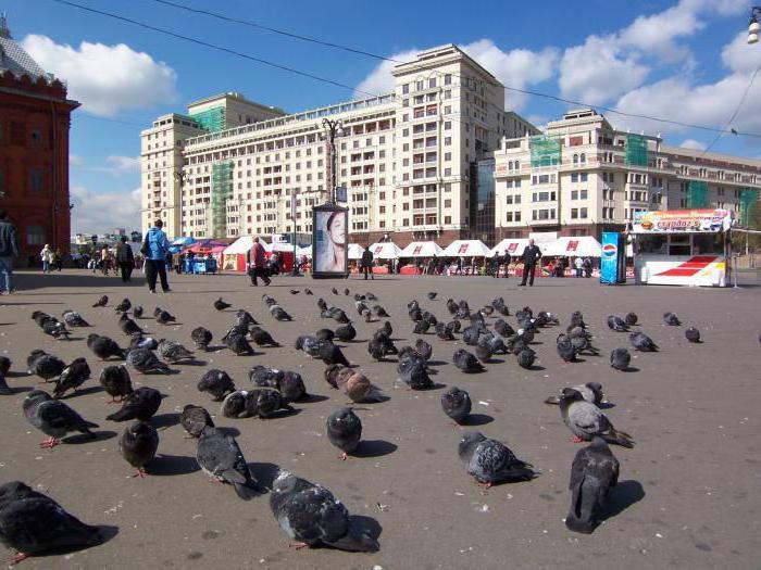 uccelli della regione di Mosca