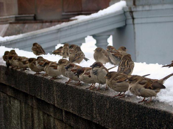 nome degli uccelli vicino a Mosca
