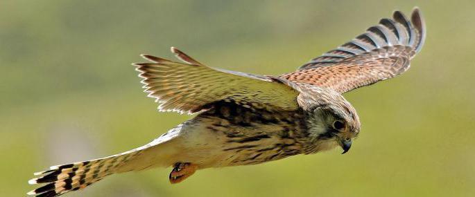 uccelli invernali della regione di Mosca
