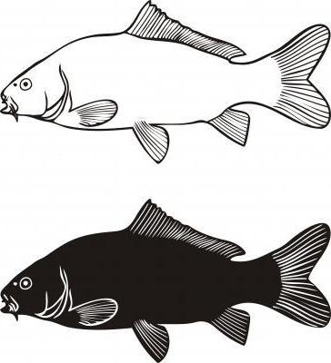 Qual è la differenza tra carpa bianca e carpa nera