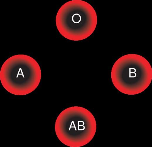 roditeljske krvne grupe