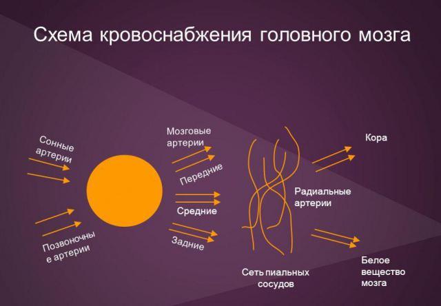 moždani sustav