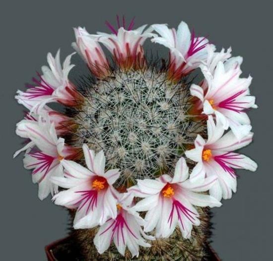 видове цветя на закрито
