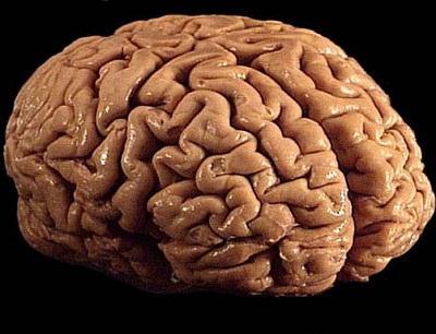 trattamento del cancro al cervello
