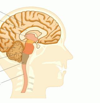 структура и функција људског мозга