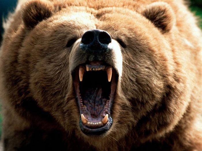 peso dell'orso bruno