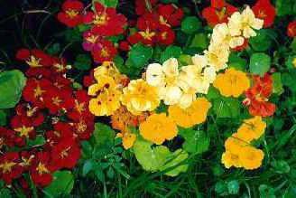 cvijeće u nijansama smeđe