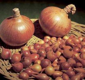 foto di cipolle