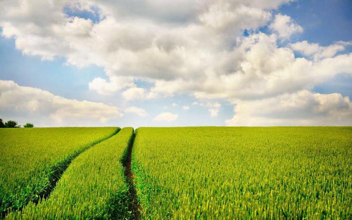 katastrální hodnota pozemku