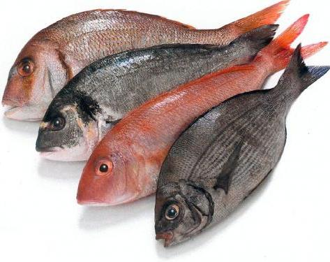 kalorii czerwona ryba