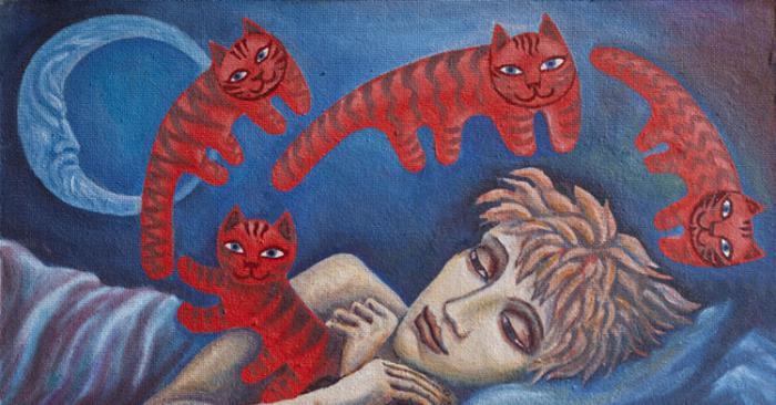 červené kočky, proč sní