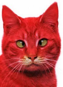 co sní o červené kočce v domě