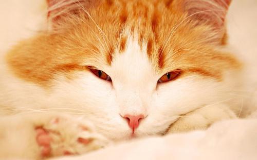 sen kniha co sen senzační kočka