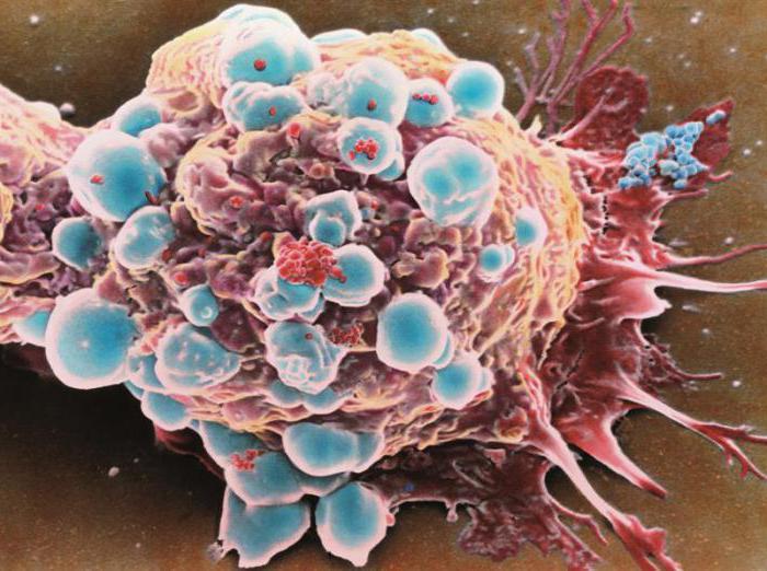 immunoistochimica endometriale