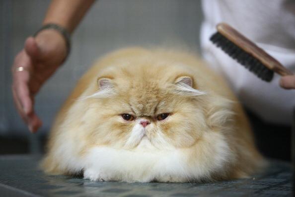 mačka je dobila prhljaj