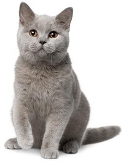 fotografija velike djevojke maca velika stražnjica ebanovina teen