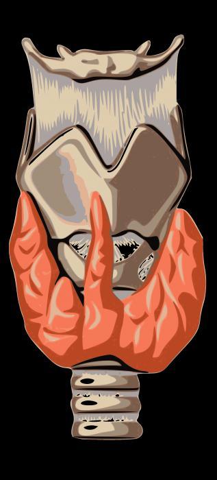 Функция на щитовидната жлеза