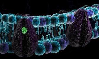 ћелијске мембране