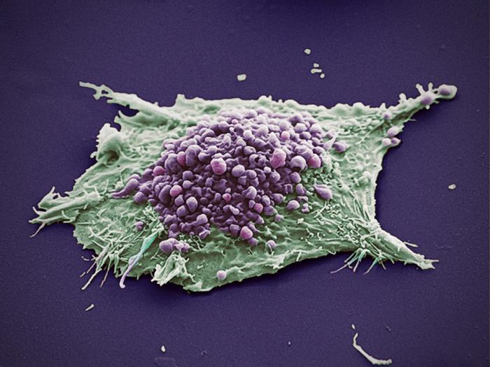 језгра ћелијске мембране