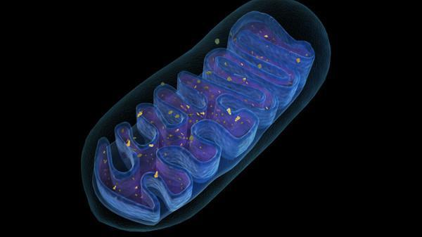 celična struktura živega organizma