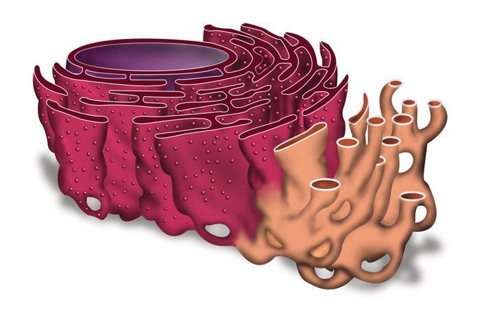 celične strukture