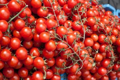 jak uprawiać pomidory cherry w domu