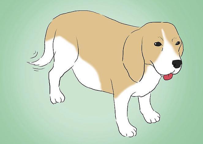 cane prima di dare alla luce