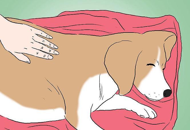 segni di nascita del cane