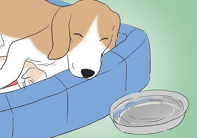 dimissione del cane dopo il parto