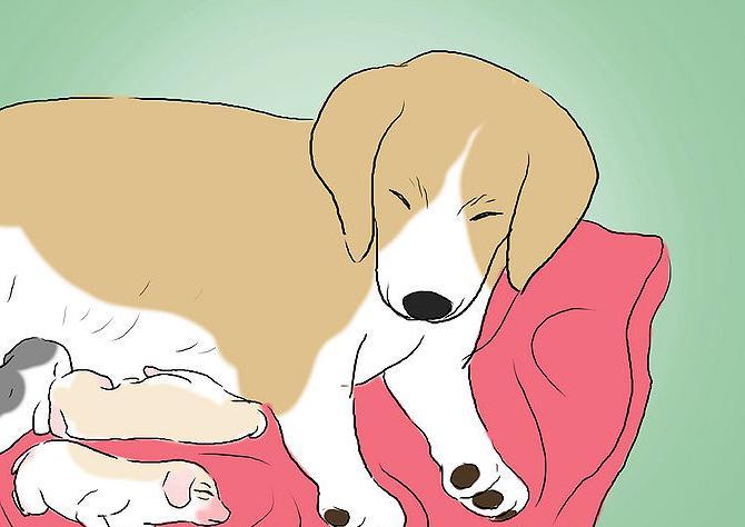 dando alla luce piccoli cani