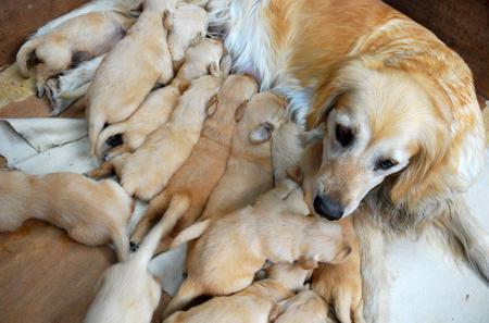 cane dopo il parto