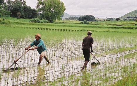 Risorse del lavoro in agricoltura