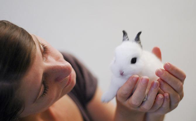 jak określić płeć królika