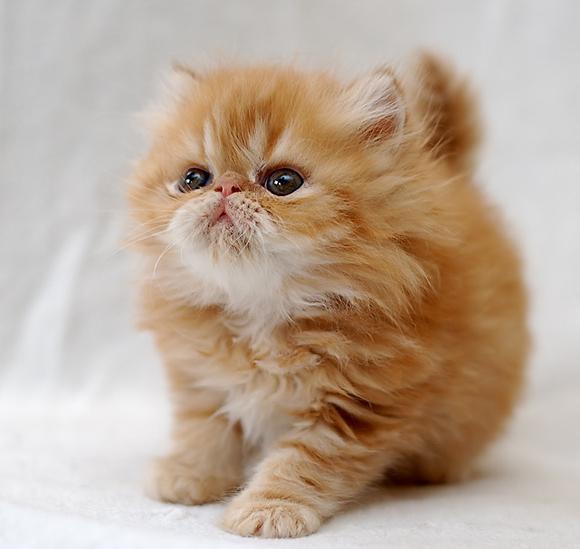 imena mačk