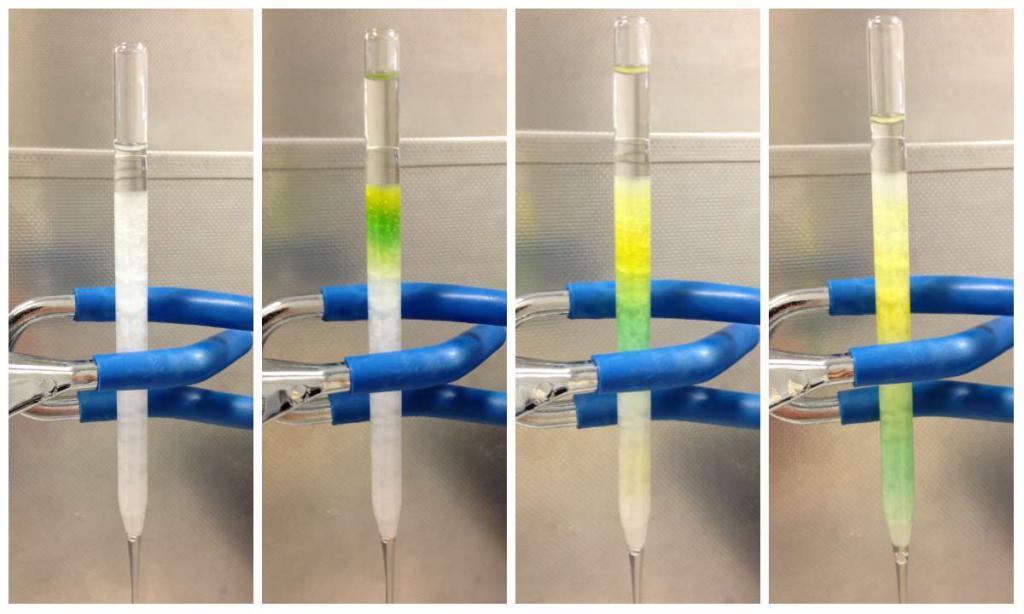 separazione delle clorofille a e c