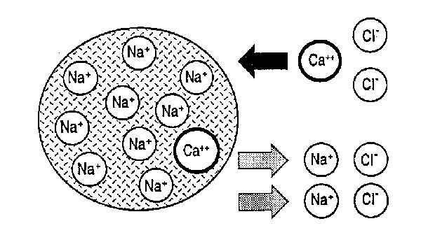 scambio ionico in una colonna cromatografica