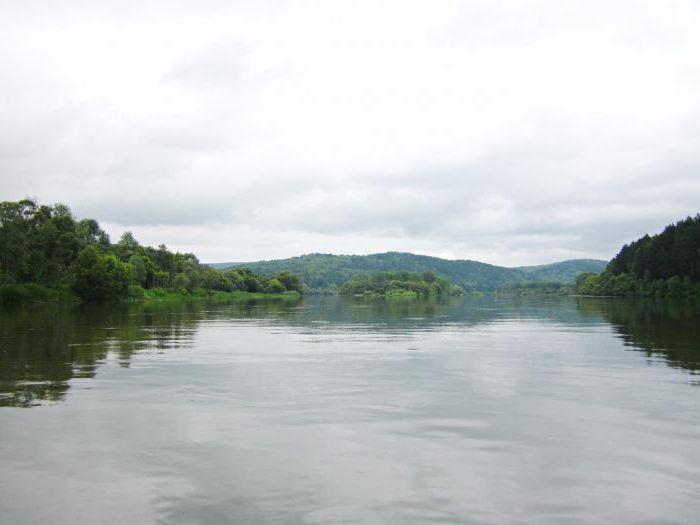 Koja se riba nalazi u rijeci Chulym