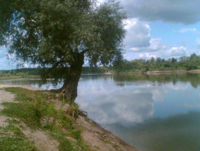 Chulym River: fotografija