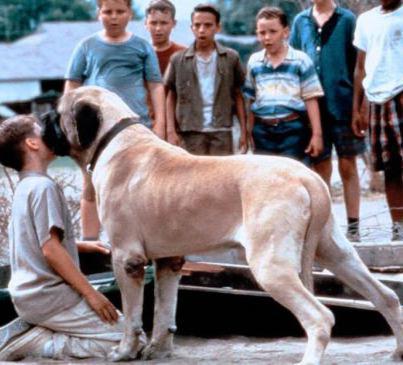 film per bambini sui cani