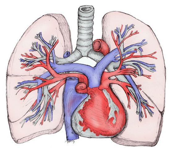 la circolazione polmonare ha inizio